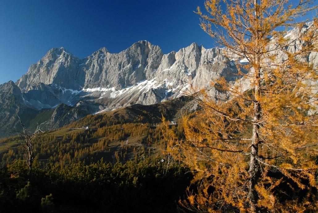 Autumn in Ramsau alpine pastures at the Dachstein - Organic Farm Rupbauer